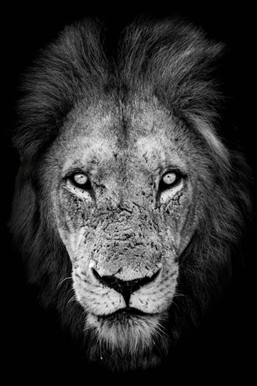 robert irwin large lion