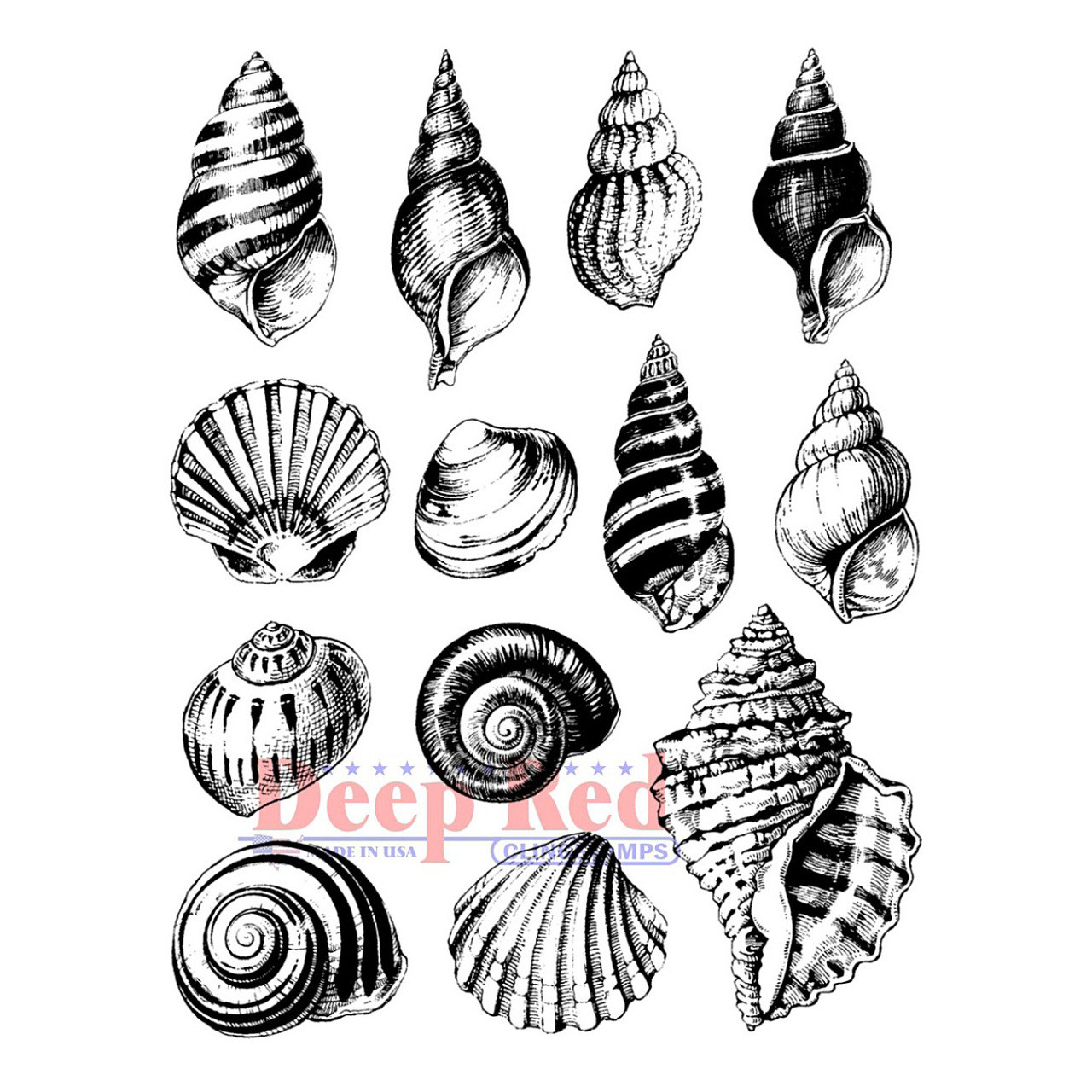 seashell collection rubber cling