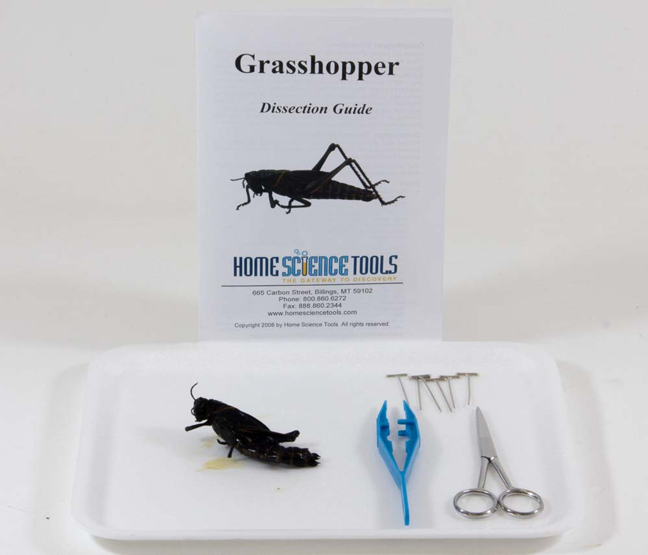 small resolution of Grasshopper Dissection Kit for Classroom Anatomy   HST