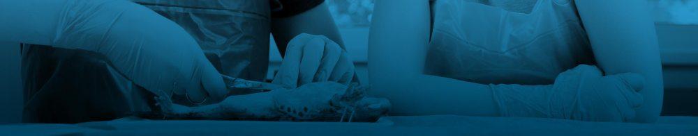 medium resolution of Animal Dissections: Supplies