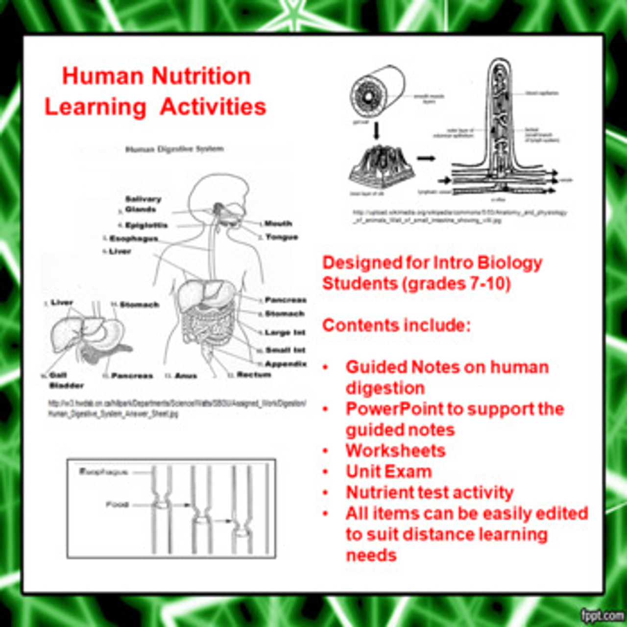 hight resolution of Human Digestion Learning Activities (Distance Learning)