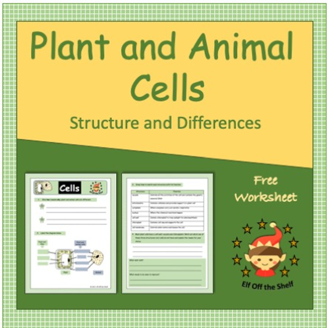 Plant and Animal Cells - Structure and Differences - Free Worksheet - Amped  Up Learning [ 1280 x 1280 Pixel ]