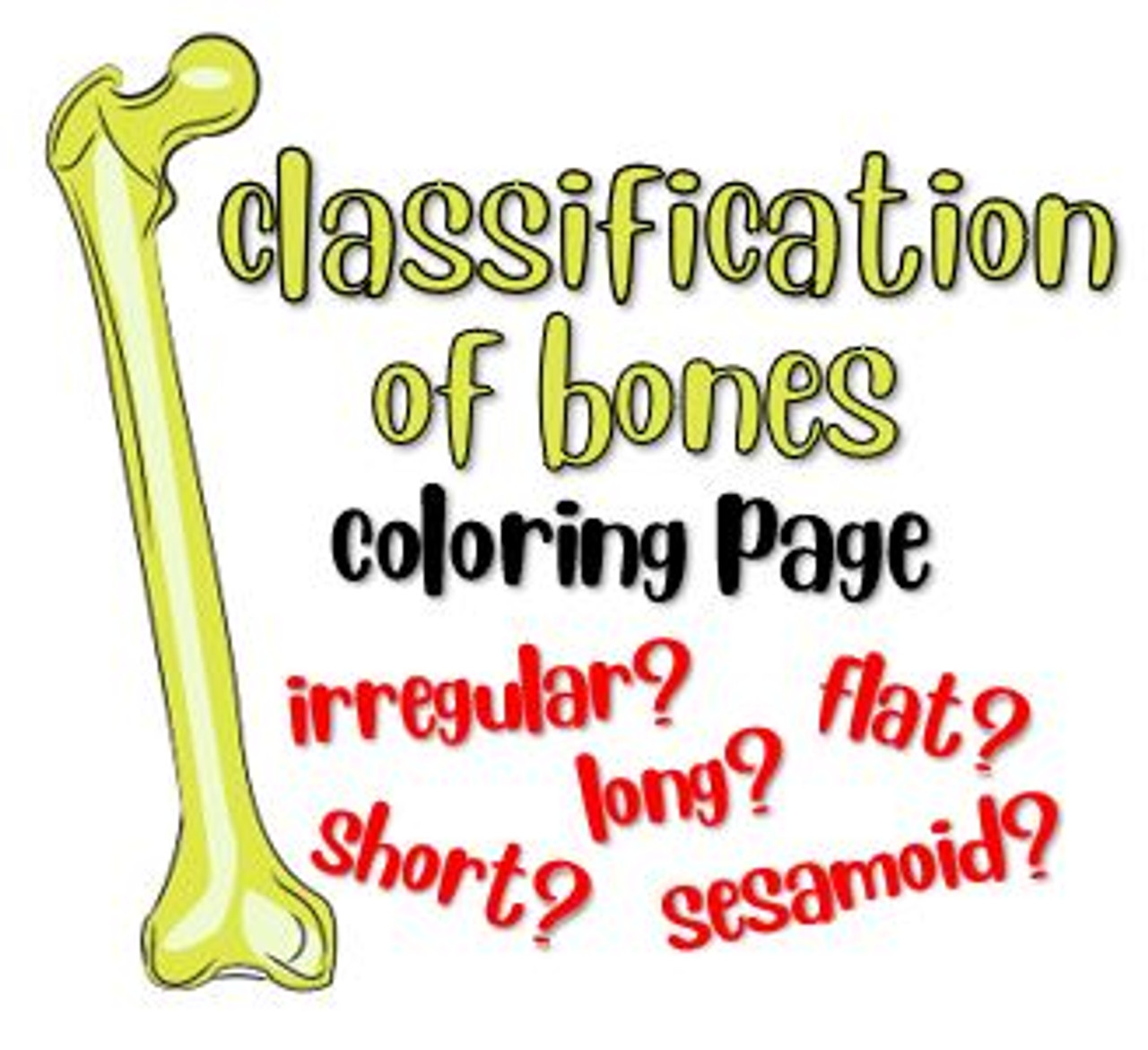 Classification of Bones Coloring Page - Amped Up Learning [ 1171 x 1280 Pixel ]