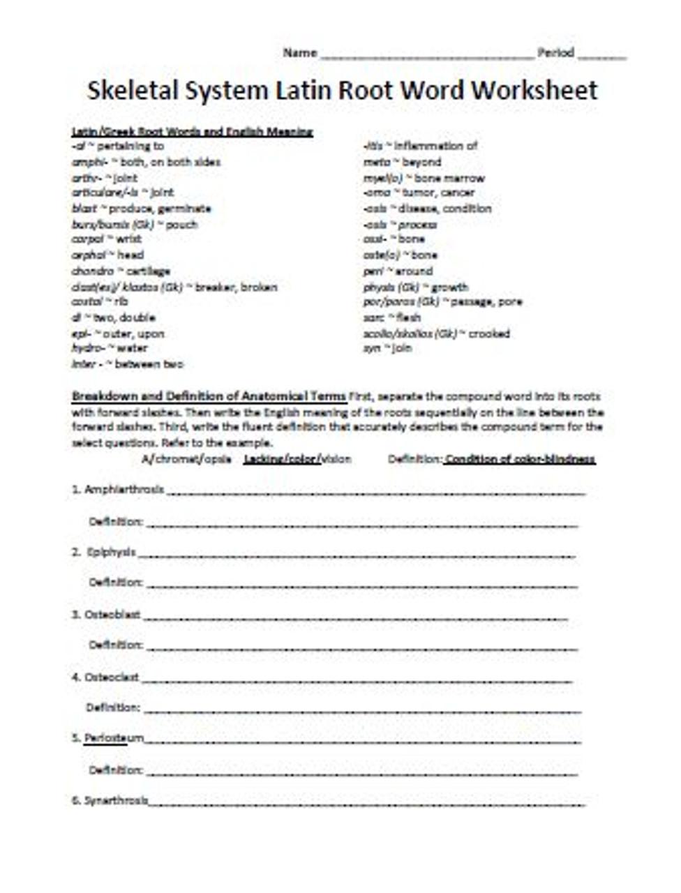 medium resolution of Skeletal System Latin Root Word Worksheet - Amped Up Learning