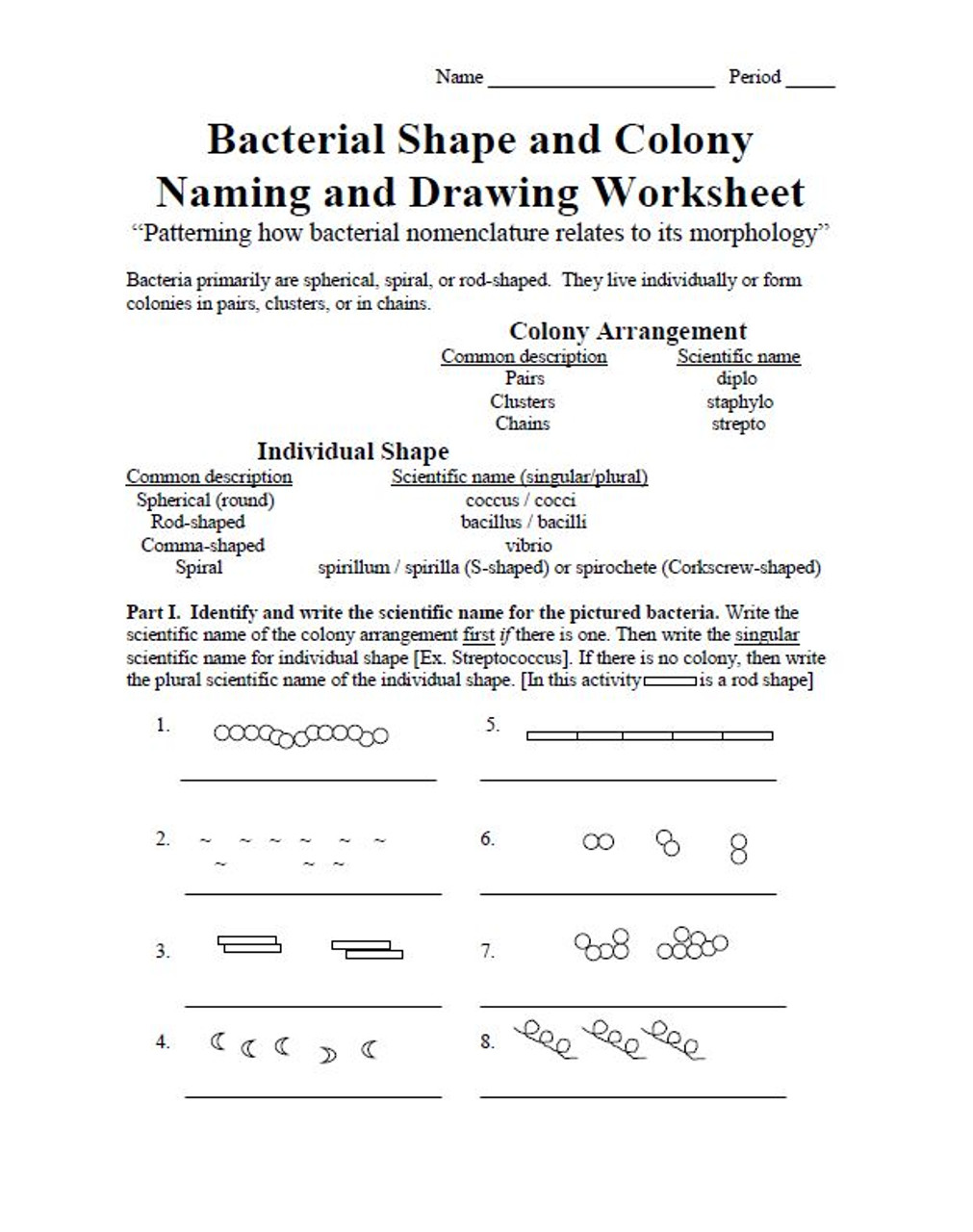 Bacterial Shape and Colony Naming and Drawing Worksheet - Amped Up Learning [ 1280 x 1011 Pixel ]
