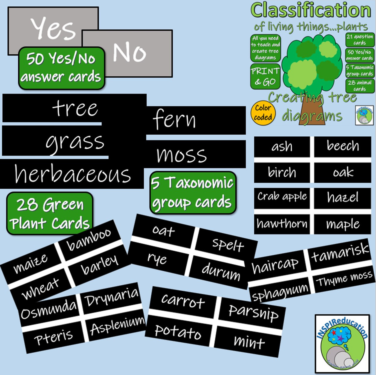 Classification of Green Plants - Decision Trees (Yes/No) Questions - Branch  diagrams - Amped Up Learning [ 1276 x 1280 Pixel ]