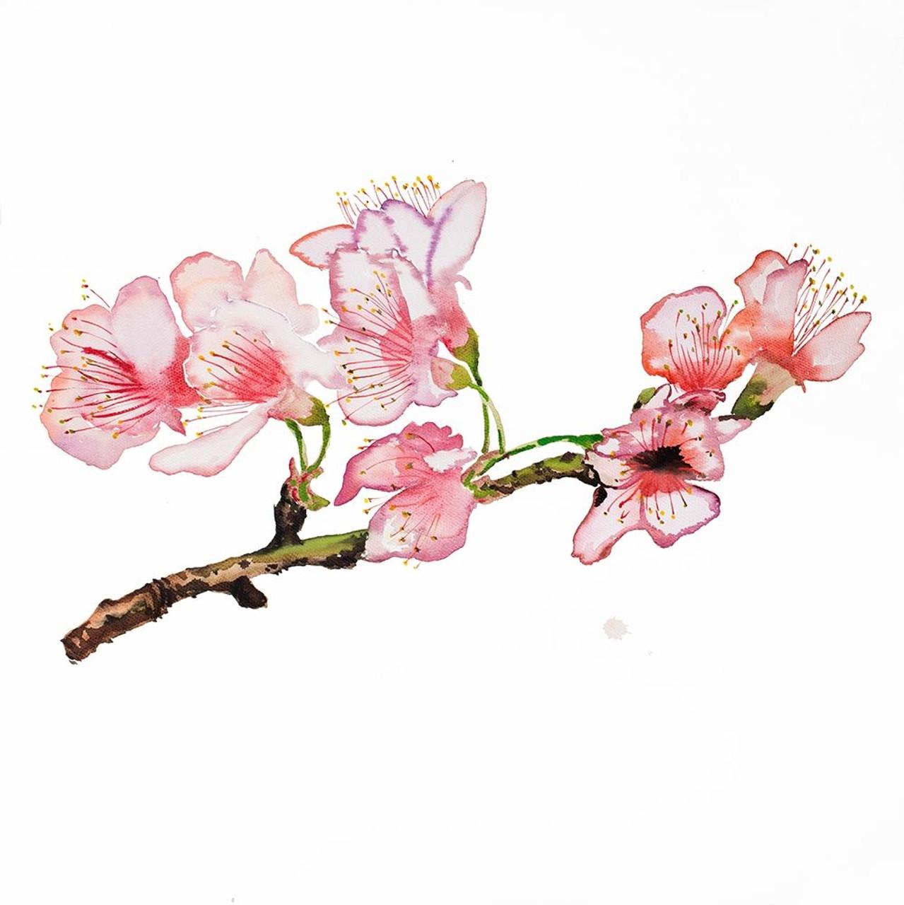 branch of cherry blossom poster print by atelier b art studio item varpdxbegflo313