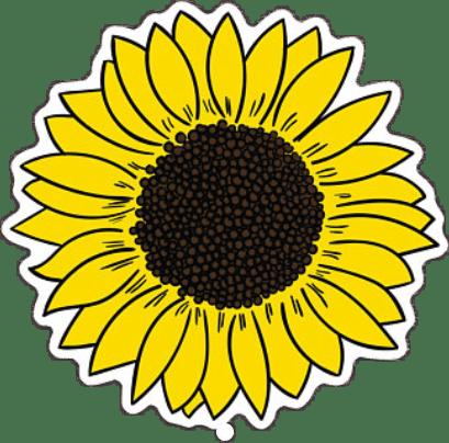 tumblr sunflower  Sticker by Fernanda Stephens H