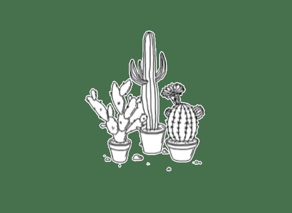 cactus tumblr drawing plants