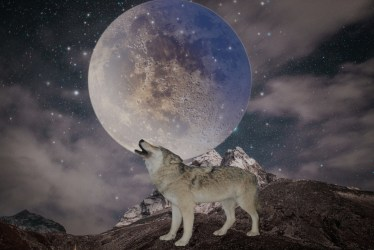 wolf wolfy moon dark Image by