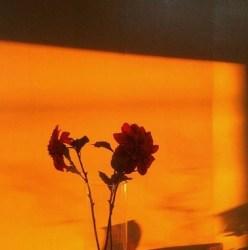 orange aesthetic Image by 𝕂𝕒́𝕣𝕞𝕖𝕟