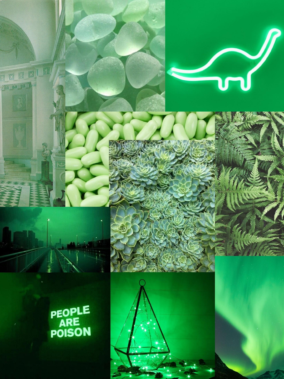 Light Green Aesthetic : light, green, aesthetic, Green, Aesthetic, Moodboard, 𝙻𝙸𝙶𝙷𝚃, Image, Coralie