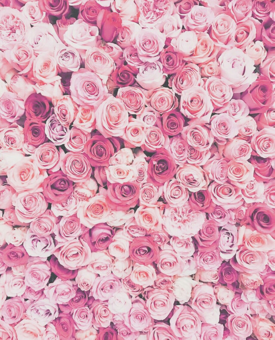 tumblr roses flower pink