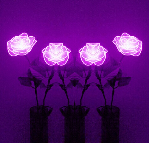 Fall Out Boy Mania Pc Wallpaper Roses Neon Purple Flowers Neonsign
