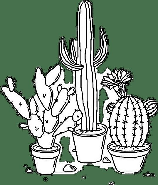 Sticker Tumblr Aesthetic Png Cactus Plant Blackandwhite