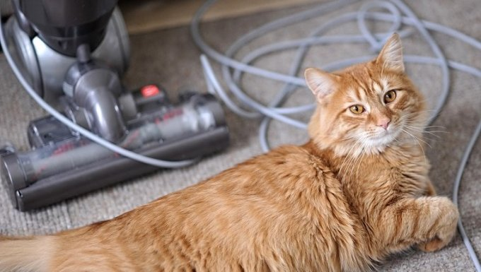 A Cat sits in front of a vacuum with a tangled cord.