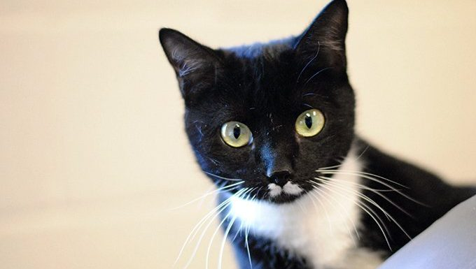 cat with wide eyes looking judgmental