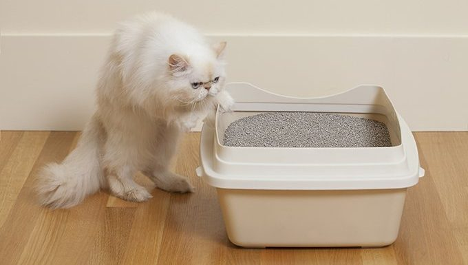 cat entering litter box