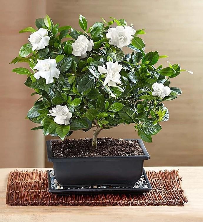 Plants Benefits Office