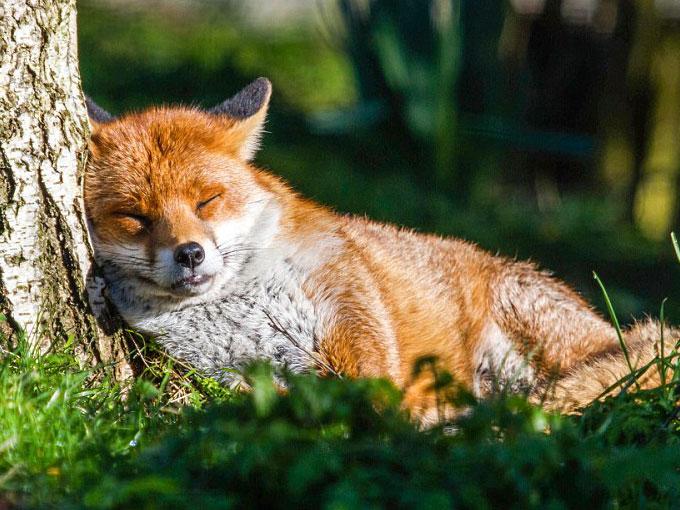 fotos de animales tomadas en jardines  ActitudFem
