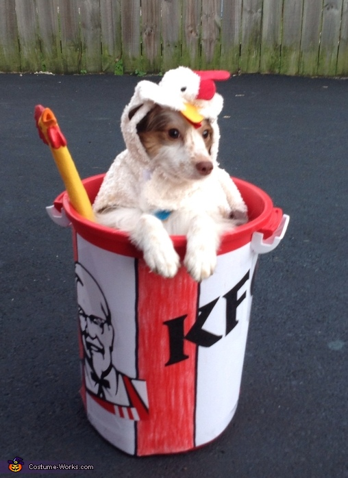 Cute Jack Russell Wallpaper 10 Hilarious Dog Costumes You Can Make On A Budget