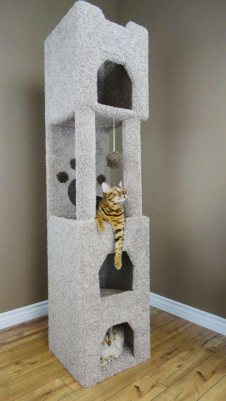new cat condos premier