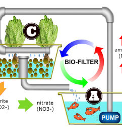 most aquaponic systems are obviously designed to take care of the fish a beneficial bacteria b and the plants c  [ 1024 x 768 Pixel ]