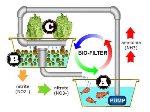 small resolution of most aquaponic systems are obviously designed to take care of the fish a beneficial bacteria b and the plants c