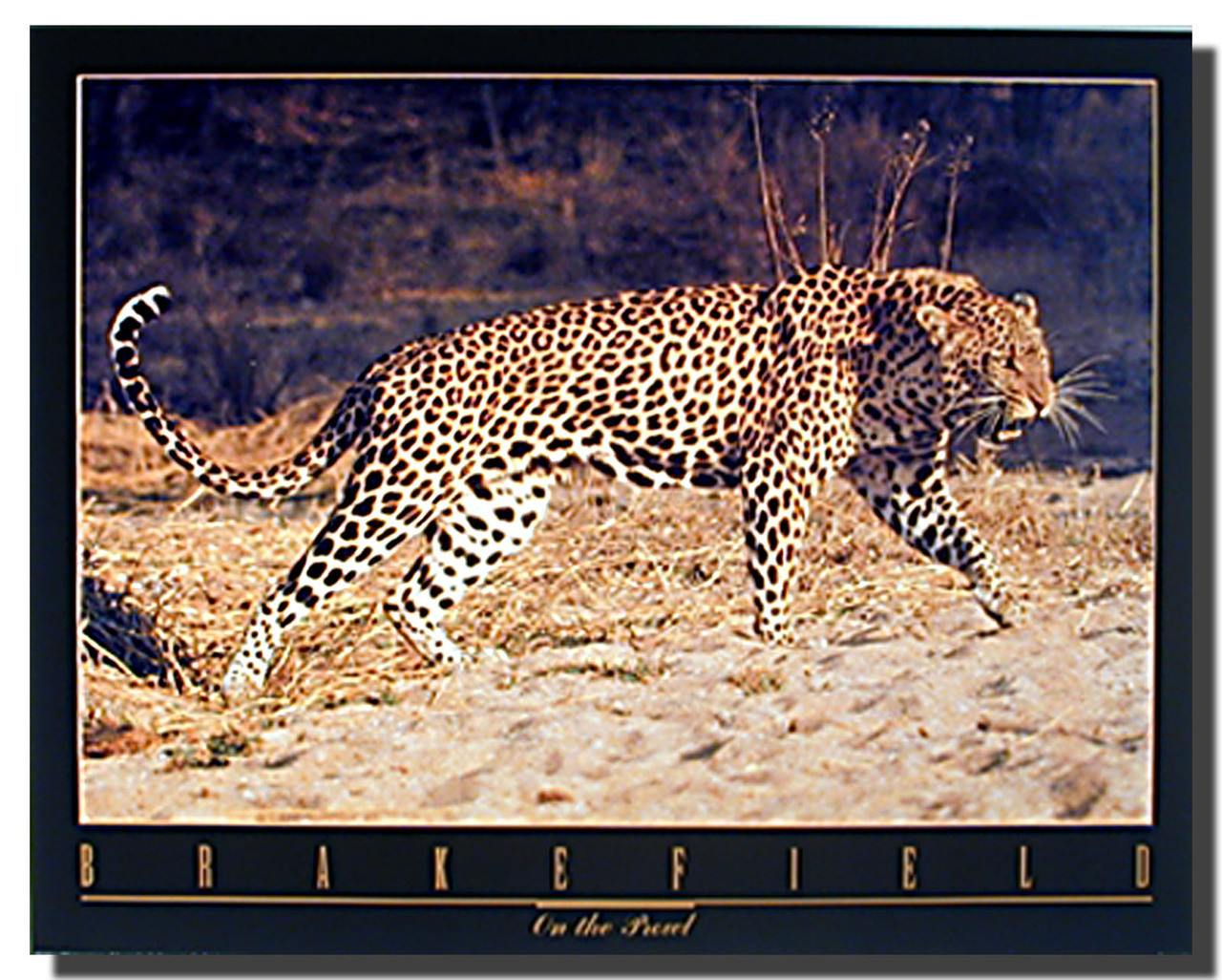 Snarling Leopard Poster Animal Posters