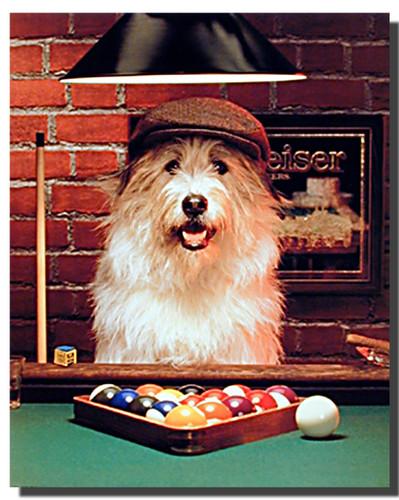 Dog Poster  Pool  Animal Posters  Dog Posters