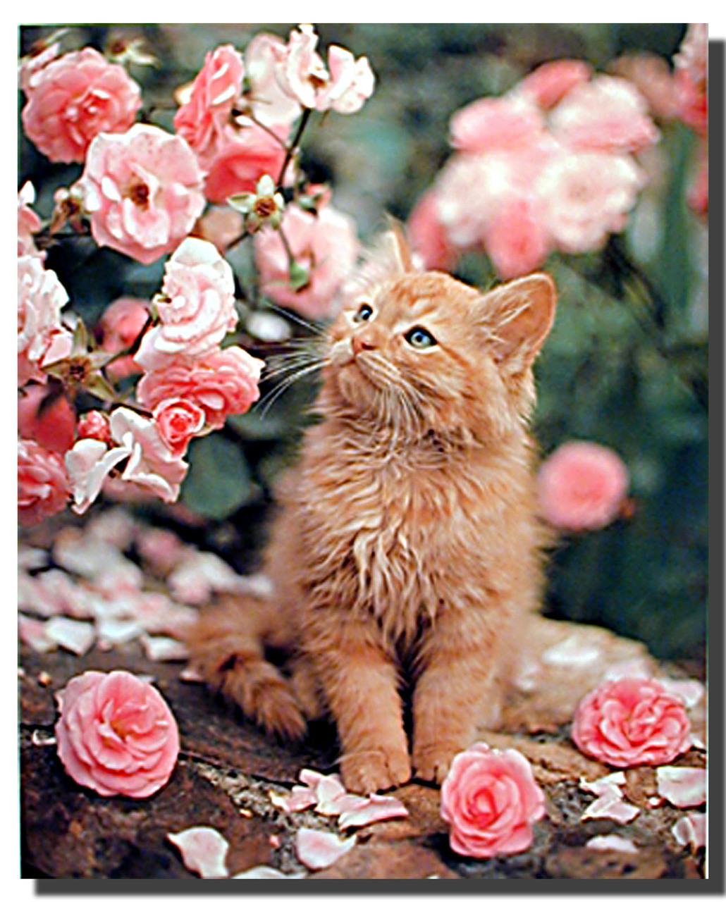 Cat And Roses Animal Posters