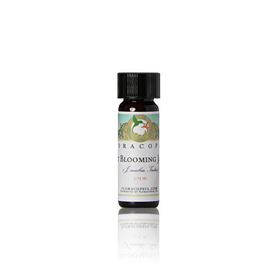 Jasmine Absolute Essential Oil Night Blooming - 1 Dram (3 ...