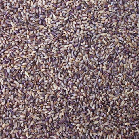 BARLEY purple heirloom dehulled - Organic Matters