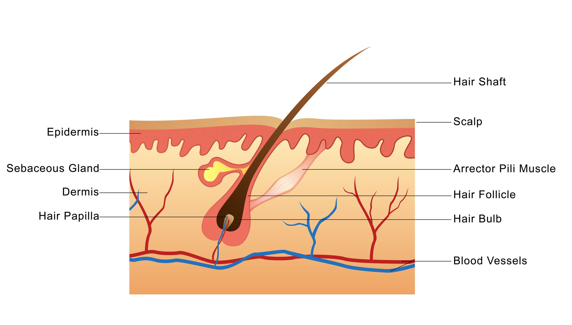Understanding Hair Growth Basics  NJoy Essentials