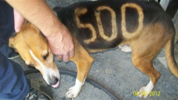Rescue Group Offers Reward: Was 'Lucky 500' The Dog Part ...