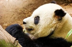 The Google Panda algorithm update rewarded strong B2B tech PR strategies.