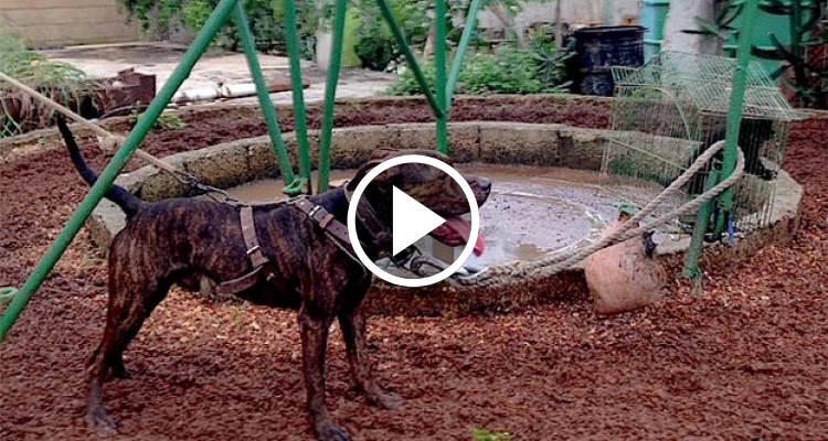 Peleas Cuba De Perros En