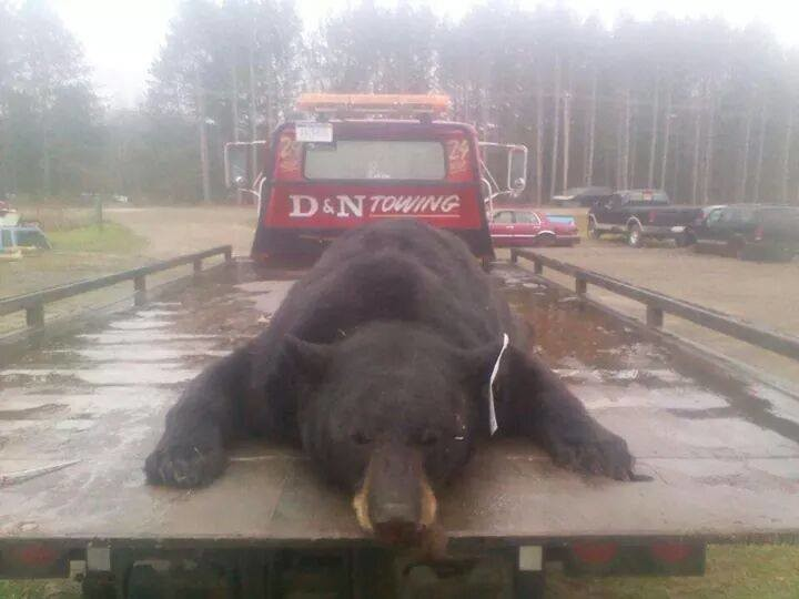 Black bear struck killed on I75 Thursday  Ogemaw County