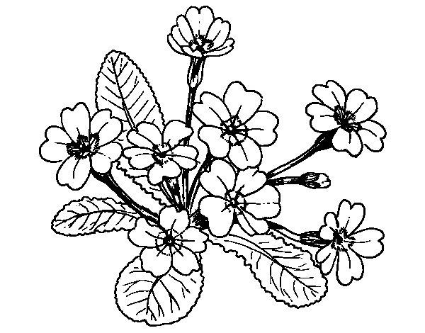 Dibujo De Mini Aloe Vera Para Colorear