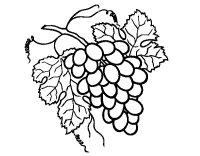 Dibujo de Racimo de uvas para Colorear - Dibujos.net
