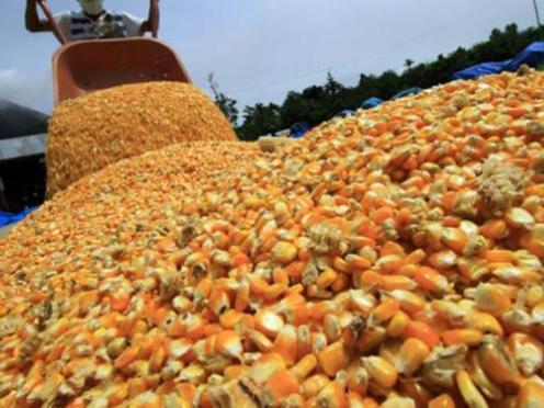 Resultado de imagen para importación maiz amarillo