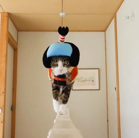 史上最愛走臺步的貓! 貓界最萌COSER非牠莫屬   ETtoday遊戲雲   ETtoday新聞雲