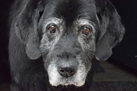 Es ideal que el animal de compañía tenga una dieta balanceada, con alimento especial para su edad. Foto: Pixabay