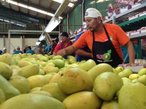 En el año 2018, los productores exportaron unas 140 mil toneladas de mango. Foto: Especial