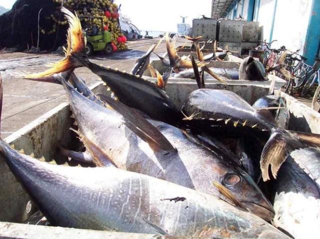 Alerta Profeco sobre marcas que ¡venden'soya' por atún!