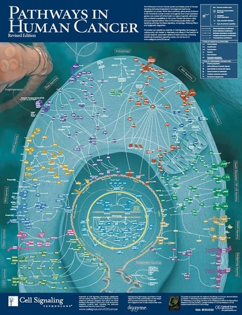 Free Pathways in Human Cancer Poster