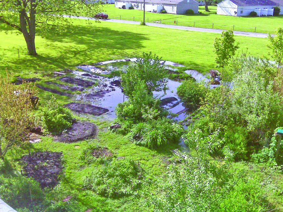 landscaping in soggy spots