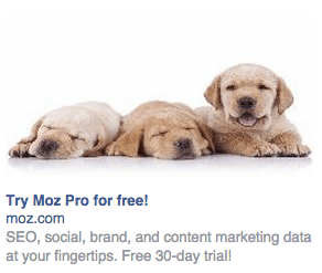 facebook-ad-puppies