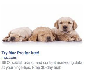 facebook-ad-puppies