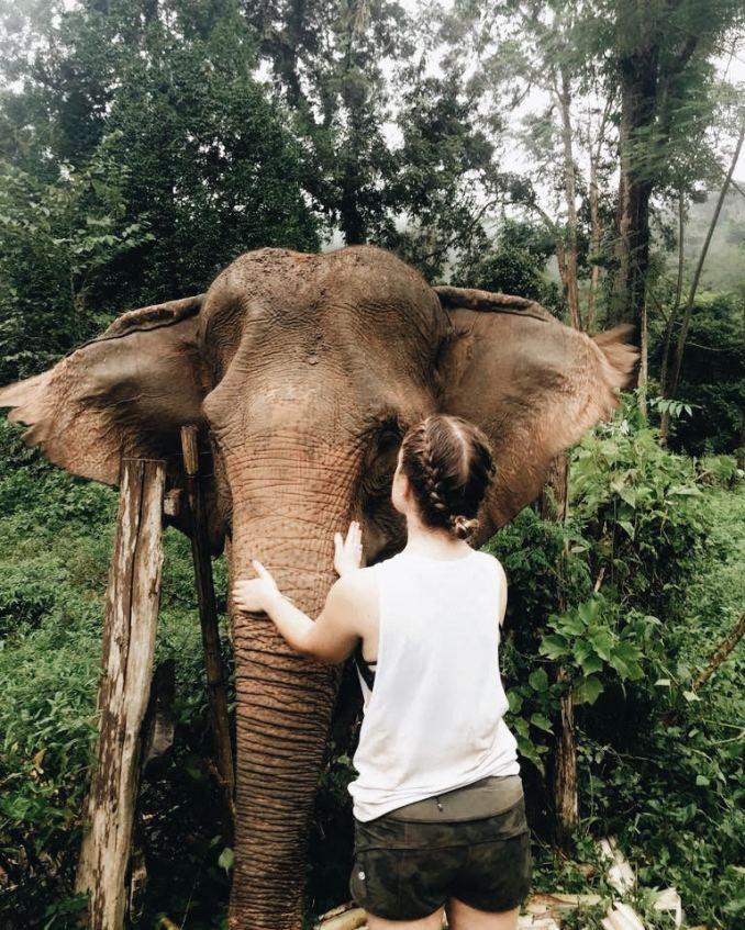 carly bishoff - elephant